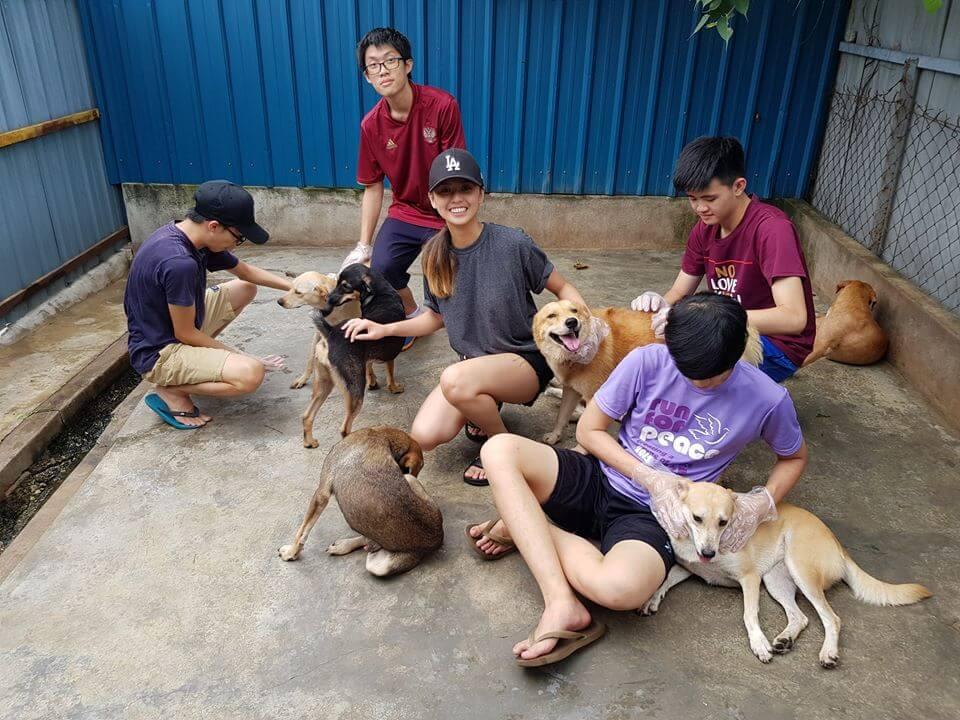 volunteer animals
